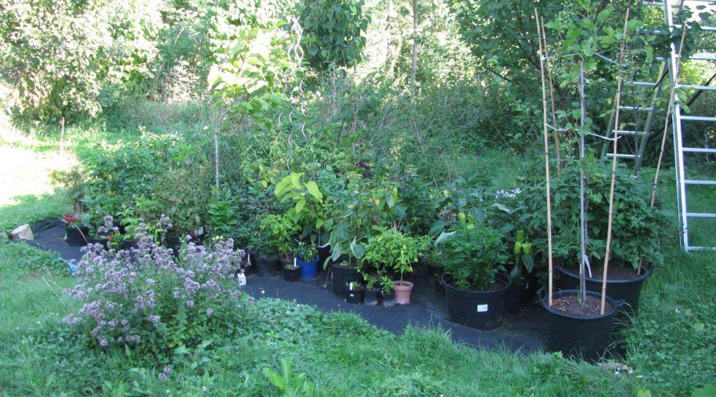 Květináčový chov sazenic plodin a dřevin