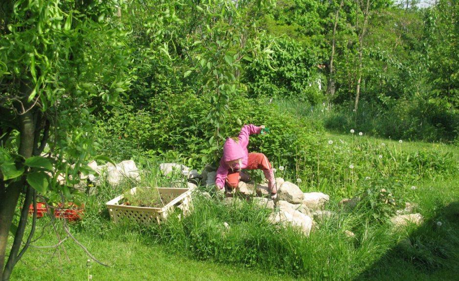 Zahrada na divoko - foto Josef Mareyi