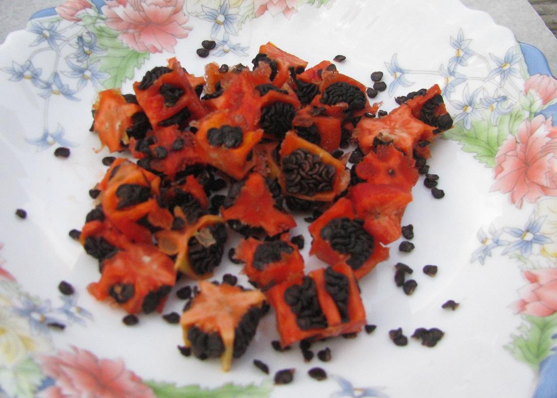 Paprika Chlupatá - tmavá semena - foto Josef Mareyi