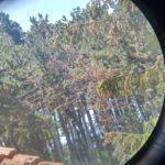 Pohled do dalekohledu na borovice