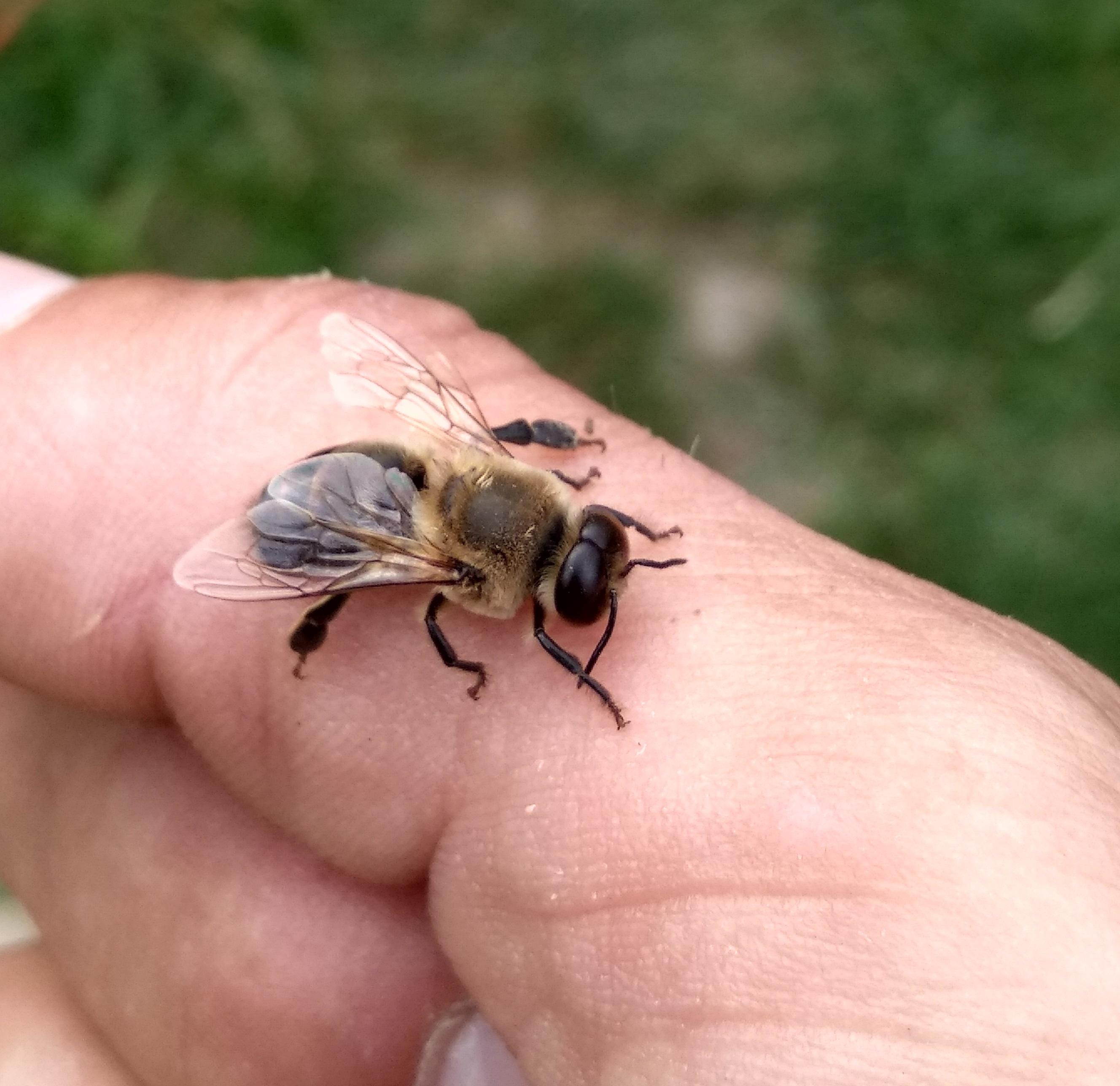 Neklidná včelka