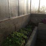 Jarní slunění sazenic ve skleníku