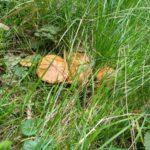 Klouzek v trávě