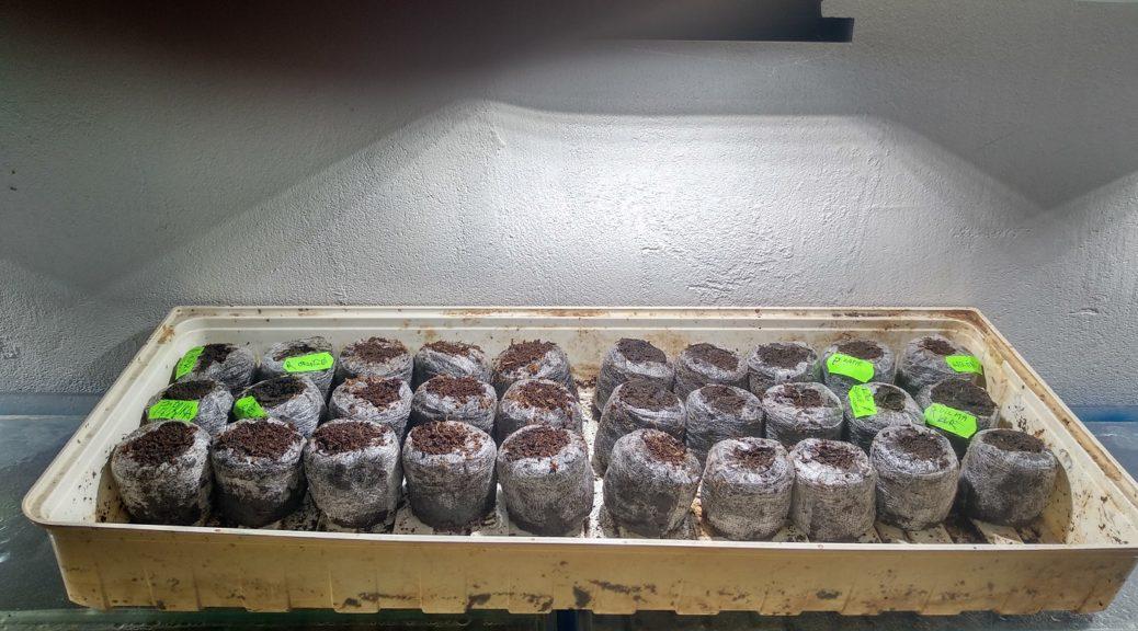 LEDka nad akvárky tentokrát slouží k malému pokusu s rozpěstováním několika plodin. Pokus je hned na očích a tak dítko může vidět celý proces vzrůstu a péče