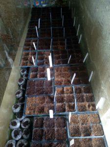 Prvouka - Intenzivní příprava sazenic nejen pro naší zahradu